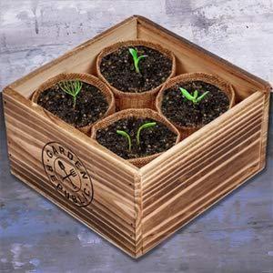 bonsai_starter_plant_small_84c0d78d-7de5-4bdf-9605-9a95ece91808_grande.jpg